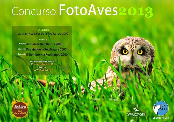 FotoAVES 2013